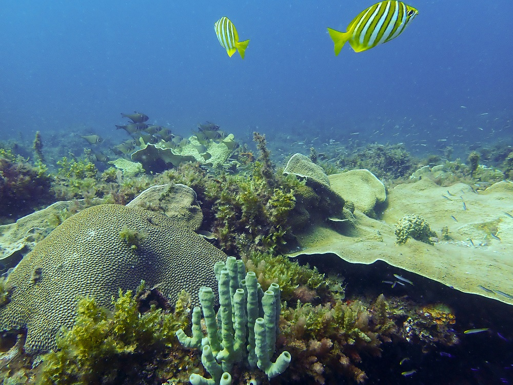 Coral garden at Squiggly Reef. Photo by Alicia Sutton